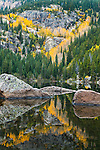autumn aspen design, reflection on Bear Lake, autumn morning in Rocky Mountain National Park, Colorado, USA