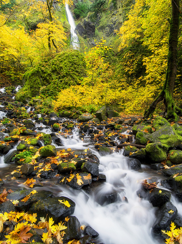 Starvation Creek and waterfalls with fall colors.Columbia River Gorge National Scenic Area, Oregon