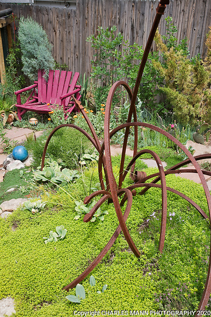 Dan Johnson used some scrap iron to make a novel sculpture to accent a bed of chartreuse thyme in his Denver garden.