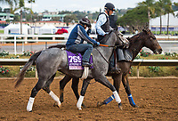 DEL MAR, CA - OCTOBER 02: Piedi Bianchi, owned by Nice Guys Stables, Jack Bick & Jay Oringer and trained by Doug F. O'Neill, exercises in preparation for the 14 Hands Winery Breeders' Cup Juvenile Fillies at Del Mar Thoroughbred Club on November 2, 2017 in Del Mar, California. (Photo by Anna Purdy/Eclipse Sportswire/Breeders Cup)