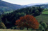 Europe/France/Rhône-Alpes/42/Loire/Massif du Forez/Env de Chalmarel : Pâturages