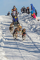 Kristy Berington on Cordova St. hill during the Anchorage start day of Iditarod 2018 on Cordova St. hill during the Anchorage start day of Iditarod 2019