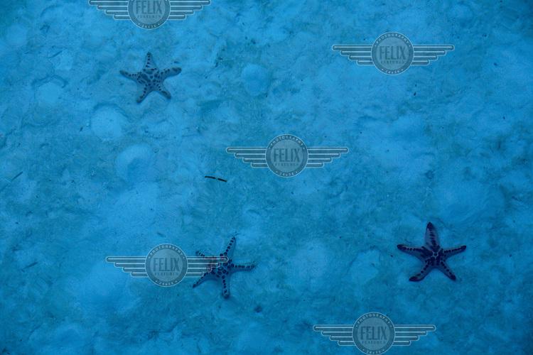 Starfish on sandy bottom. Kapalai, Malaysia.