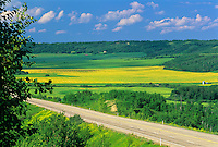 Canola fileds on the Yellowhead Highway<br /> Minnedosa<br /> Manitoba<br /> Canada