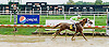 Langley winning at Delaware Park on 9/3/12
