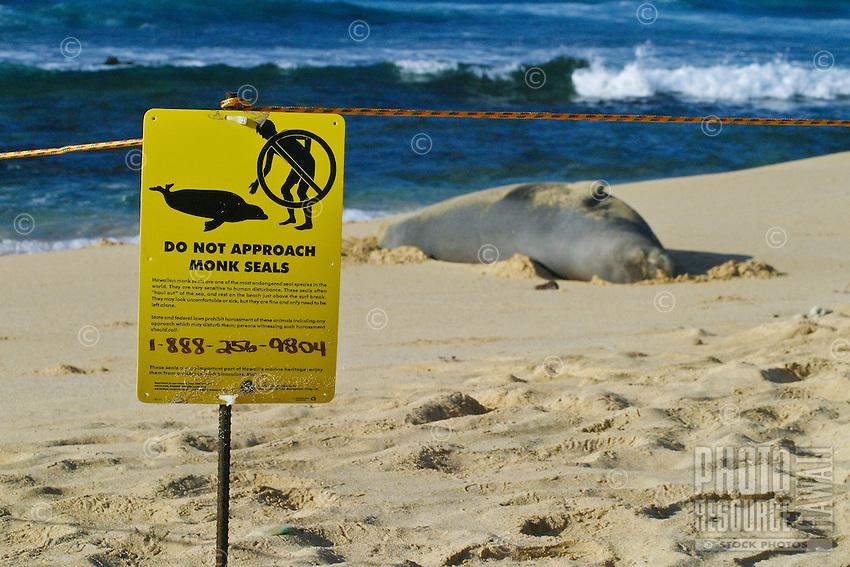 A sign warns curious onlookers to keep a safe distance from an endangered Hawaiian Monk Seal resting on Sandy Beach along Oahu's east coast. Scientific name (Monachus schauinslandi)