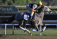 Poker Player, trained by Wayne Catalano, trains for the Breeders' Cup Juvenile Turf at Santa Anita Park in Arcadia, California on October 30, 2013.