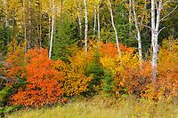 Autumn foliage<br /> Ear Falls<br /> Ontario<br /> Canada