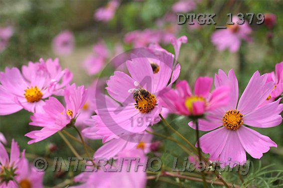 Gisela, FLOWERS, photos(DTGK1379,#F#) Blumen, flores, retrato