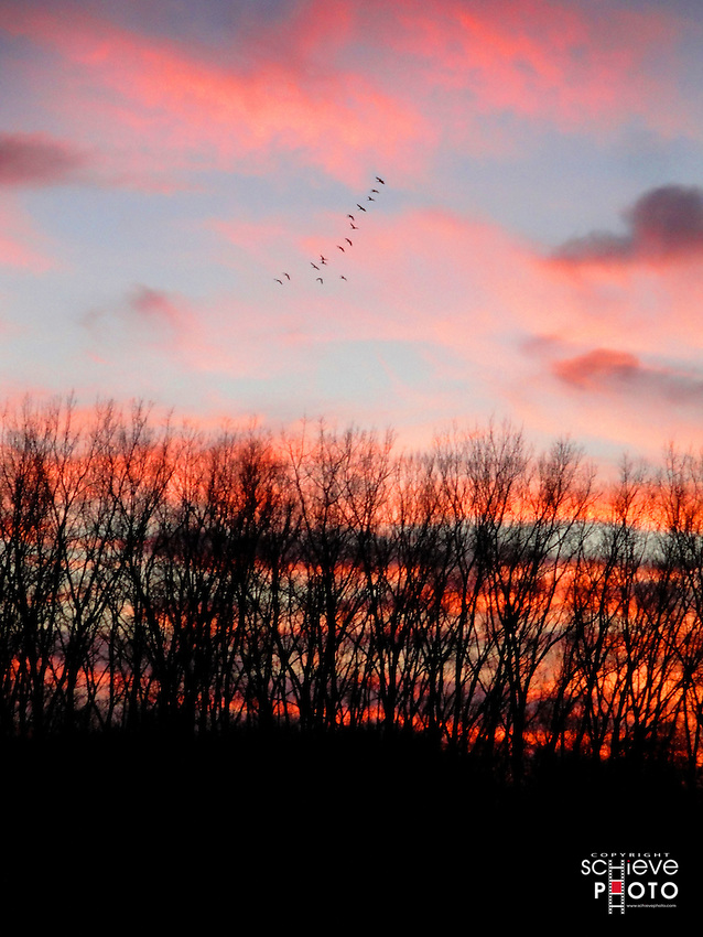 A small flock of Canada Geese heads home for the night.