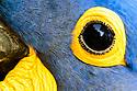 Pantanal Highlights