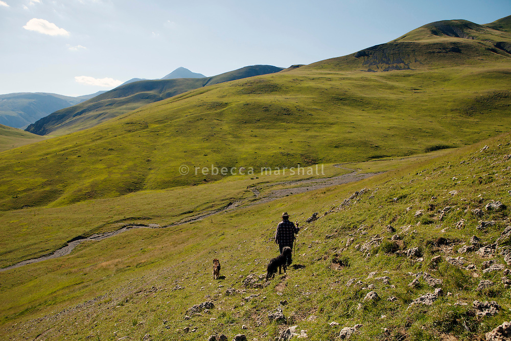 Bernard Bruno and his sheepdogs walk towards across the hills above the Plateau de Longon, in the Moyenne Tinée region of the Mercantour National Park, French Alps, France, 01 August 2013.