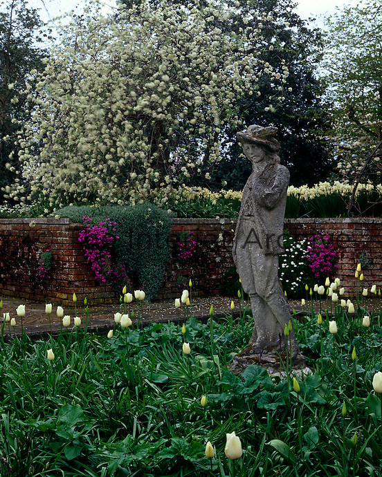 The statue of a boy stands amongst a planting of tulips (Tulipa)