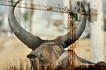INDIA:  FROM COWS TO CALL CENTRES, GURGAON; DELHI, NIZAMUDEEN, MUMBAI