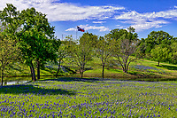 Bluebonnets along along the Blueblonnet trail in Ennis Texas .  We went up for their bluebonnet festival they have every April.  While the flowers were not a thick as previous years it certainly was a pretty landscape scene with the wildflowers, blue sky  along the creek with the Texas flag in the back ground representing this texas bluebonnet landscape.