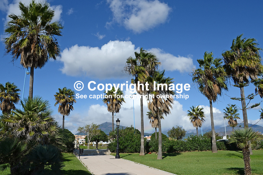 San Pedro de Alcantara, Marbella, Spain, beach, palms, palm trees, beach, blue sky, white clouds, mountains, 201211100882..Copyright Image from Victor Patterson, 54 Dorchester Park, Belfast, UK, BT9 6RJ..Tel: +44 28 9066 1296.Mob: +44 7802 353836.Voicemail +44 20 8816 7153.Skype: victorpattersonbelfast.Email: victorpatterson@me.com.Email: victorpatterson@ireland.com (back-up)..IMPORTANT: If you wish to use this image or any other of my images please go to www.victorpatterson.com and click on the Terms & Conditions. Then contact me by email or phone with the reference number(s) of the image(s) concerned.