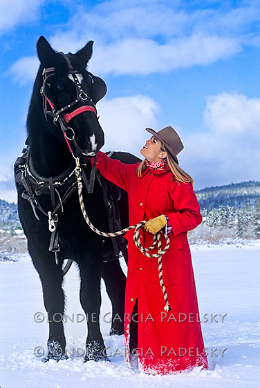 Cowgirl with her Clydesdales horse harnessed for a winter sleigh in the Eastern Sierra, California