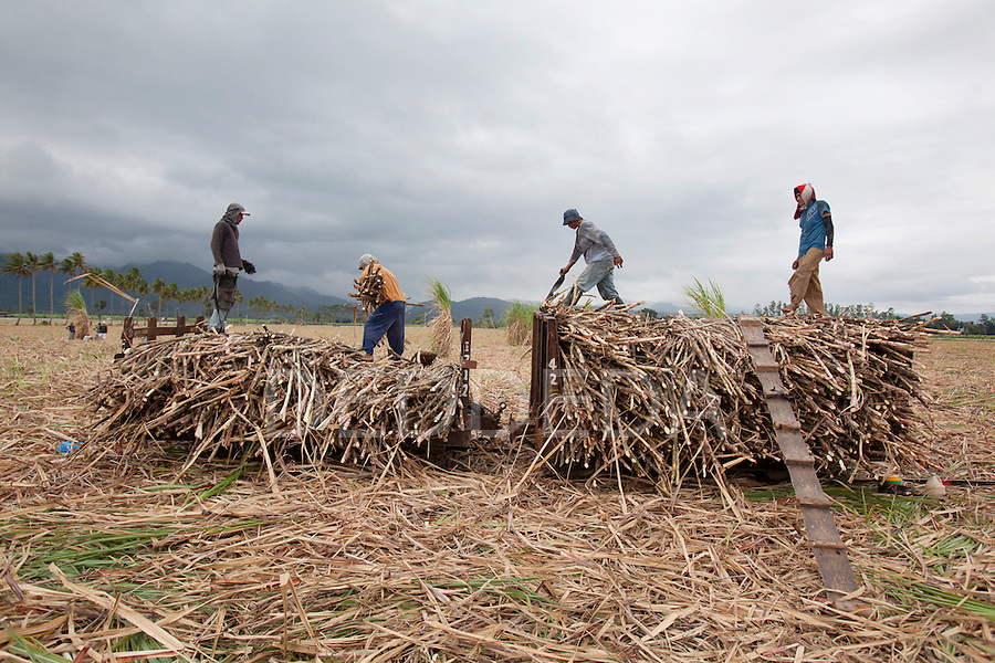 Men harvest sugar cane near Bias City on Negros, Philippines.
