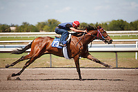 #73Fasig-Tipton Florida Sale,Under Tack Show. Palm Meadows Florida 03-23-2012 Arron Haggart/Eclipse Sportswire.