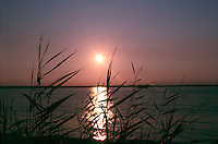SUNSET<br /> Over ocean, Through reeds<br /> Long Beach Island - NJ
