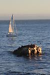 Sailing off Lighthouse Point in Santa Cruz