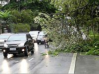 SÃO PAULO - SP -  18 DE FEVEREIRO 2013. ARVORE, galho de árvore cai na Av Sumaré, sentido Pinheiros,próximo a estação do Metro ocupando a faixa destinada aos motociclistas, devido aos fortes ventos e a chuva desta tarde de segubda (18). FOTO: MAURICIO CAMARGO / BRAZIL PHOTO PRESS.