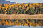 Fall foliage on the Dead River in Eustis, ME, USA