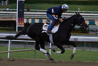 Slim Shadey breezing for trainer Simon Callaghan at Santa Anita Park in Arcadia California