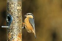 Kleiber, an der Vogelfütterung, Fütterung, mit Körnern gefüllten Futtersilo, Spechtmeise, Sitta europaea, Eurasian nuthatch