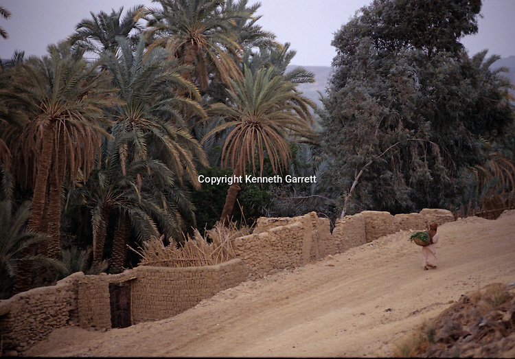 Farm surrounded by mudbrick wall, El BawatiEgypt; Archaeology; Bahariya Oasis; Greco-Roman;Golden Mummies; Valley of the Golden Mummies; Book originals; mummies