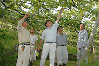Denis Dubourdieu with workers at the Makioka Vineyard Yamanashi Prefecture, Japan. Dubourdieu is helping to develop a Japanese white wine that will be eaten primarily with Japanese cuisine.