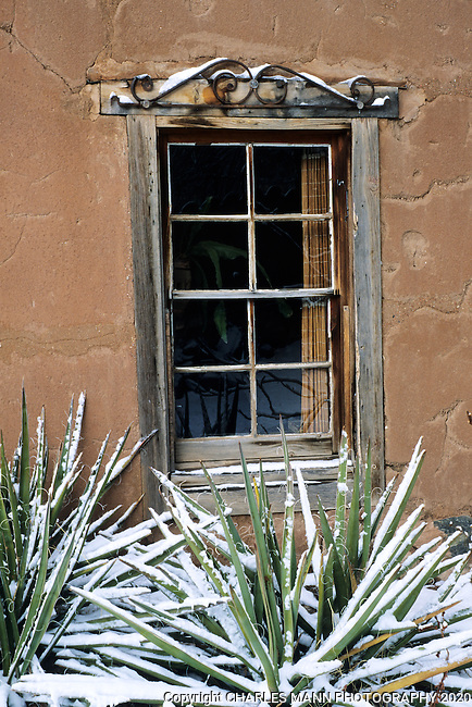 Snow decorating a  Yucca baccatta, or Spanish bayonet, accents an adobe wall and wooden window in a Canyon road compound in Santa Fe, New Mexico