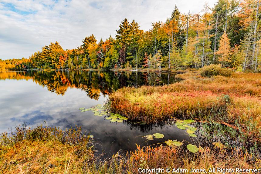 Irwin Lake and bog, Hiawatha National Forest, Upper Peninsula of Michigan.