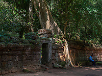 Ta Prohm set in lush jungle vegetion, is the modern name of the temple at Angkor, Siem Reap Province, Cambodia, built in the Bayon style largely in the late 12th and early 13th centuries.