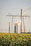 Sunflower field, Coal-fired power station, Kovacevo, Bulgaria