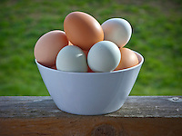 Variety of fresh eggs in a white bowl sit on a porch railing on a Sunday afternoon after being gathered from the coop.