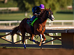 OCT 21: Improbable prepares for the Breeders' Cup Dirt Mile at Santa Anita Park in Arcadia, California on Oct 21, 2019. Evers/Eclipse Sportswire/CSM