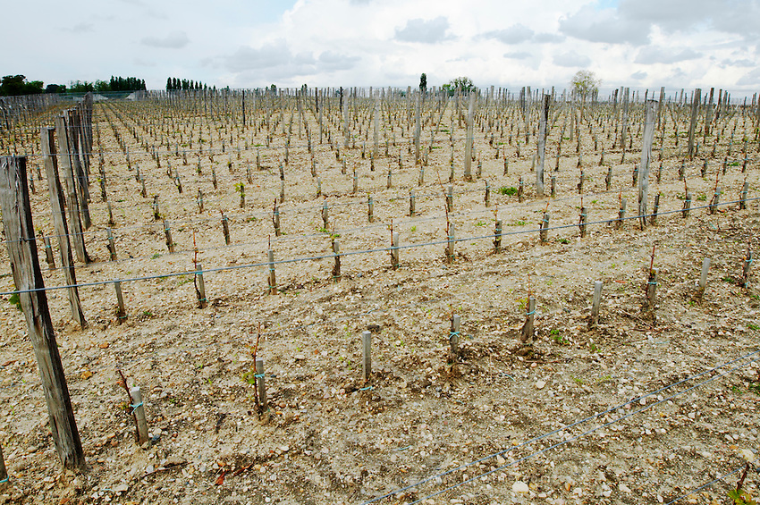 New densely planted vineyard 13,500 vines / ha chateau la garde pessac leognan graves bordeaux france