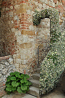 Ivy covered stairs, Montepulciano, Italy, Tuscany