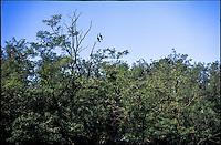 Tornavento di Lonate Pozzolo (Varese). Cormorani nel Parco del Ticino lungo il Naviglio Grande --- Tornavento Lonate Pozzolo (Varese). Cormorants in the Park of Ticino river along the Naviglio Grande canal