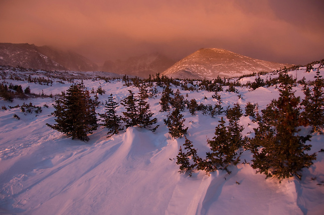 Colorful sunrise light on Mt Meeker, Longs Peak and Mount Lady Washington from the krummholz near treeline, winter, Rocky Mountain National Park; blowing snow, February 2008, Colorado, USA, Rocky Mountains.