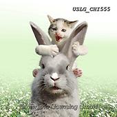 CHIARA,REALISTIC ANIMALS, REALISTISCHE TIERE, ANIMALES REALISTICOS, paintings+++++,USLGCHI555,#A#, EVERYDAY ,photos