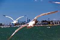 The San Francisco skyline viewed from the perspective of a gull flying over the bay waters along Alameda's Crown Beach.