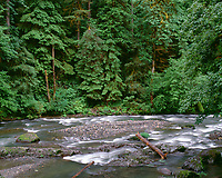 USA, Oregon, Willamette National Forest,  South Santiam River and lush old growth forest.