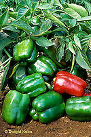 HS41-053x  Pepper - sweet bell pepper, Northstar variety