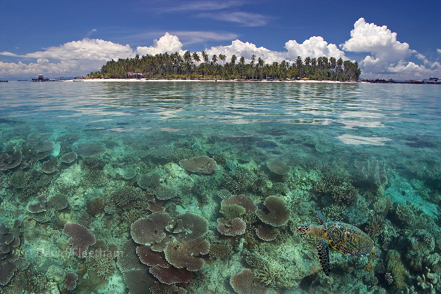 This digital composite includes a hawksbill turtle, Eretmochelys imbricata, and the island of Mabul, Malaysia.