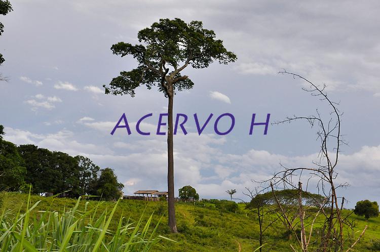Castanheiras.<br /> Acre<br /> Altino Machado