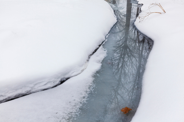 Winter morning light on a stream near Lake Marmo at The Morton Arboretum; Lisle, IL