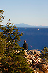 a tourist looking out over the grand canyon from the north rim campground
