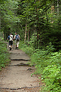Day hikers make their way along the Zealand Trail during the summer months in the White Mountains, New Hampshire USA. Parts of this trail follows the old Zealand Valley Railroad, which was a logging railroad in operation from 1884-1897(+/-)